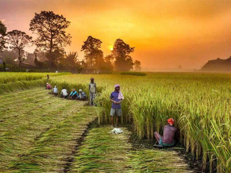 Transfer Of Yojna Amount Into Farmers Account